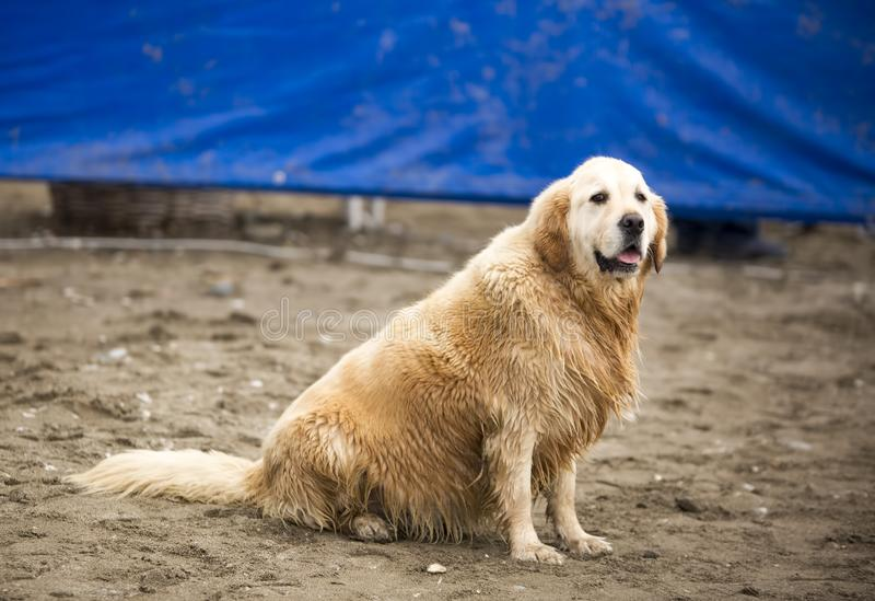 Stray dog. Derelict, forlorn, alone dog outdoor.  stock photos
