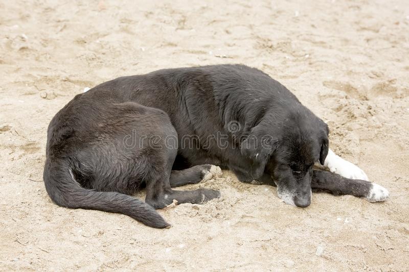 Stray dog. Derelict, forlorn, alone dog outdoor.  stock photo