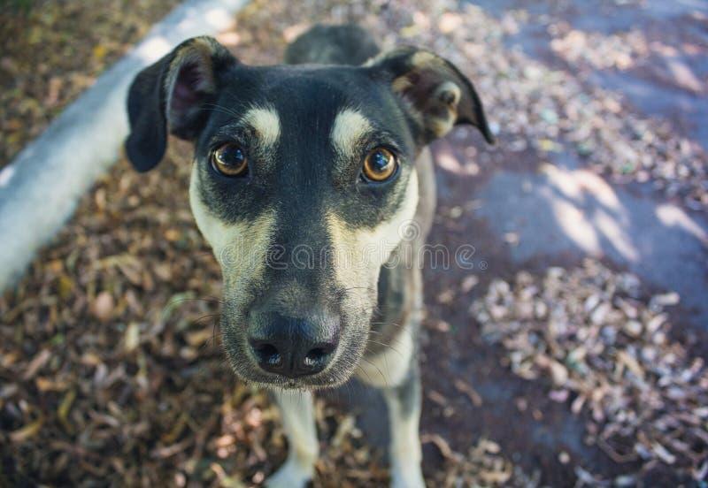 Stray dog gazing at the camera close-up royalty free stock images