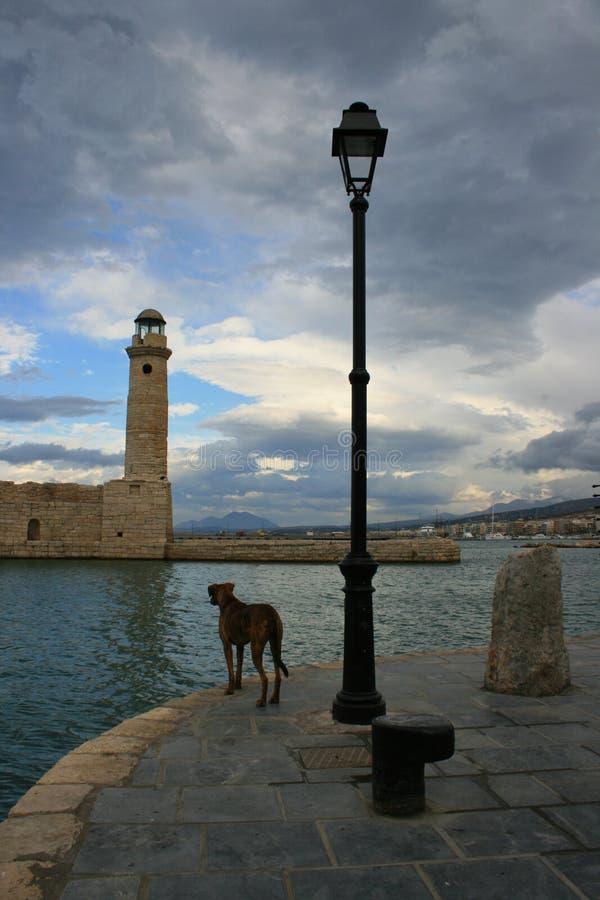Stray dog in harbor royalty free stock image