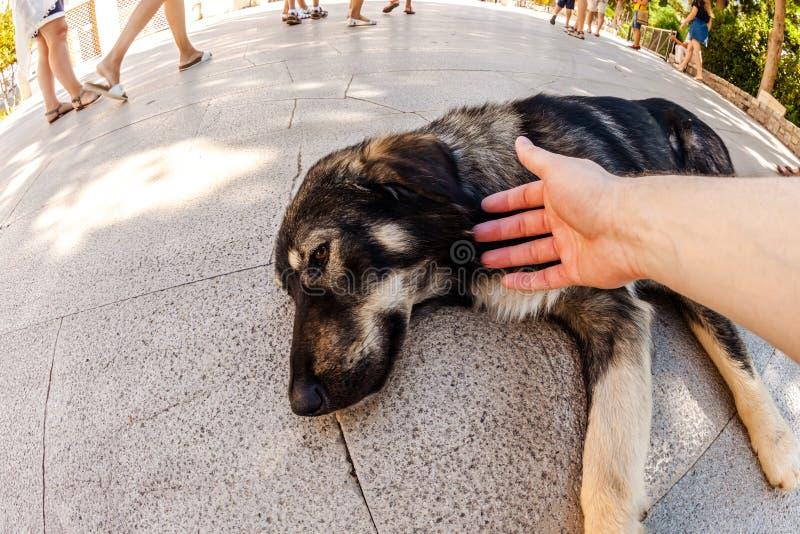 Stray dog helping stock photo