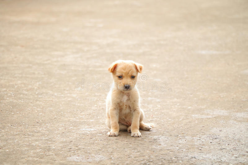 Stray dog hungry food royalty free stock image