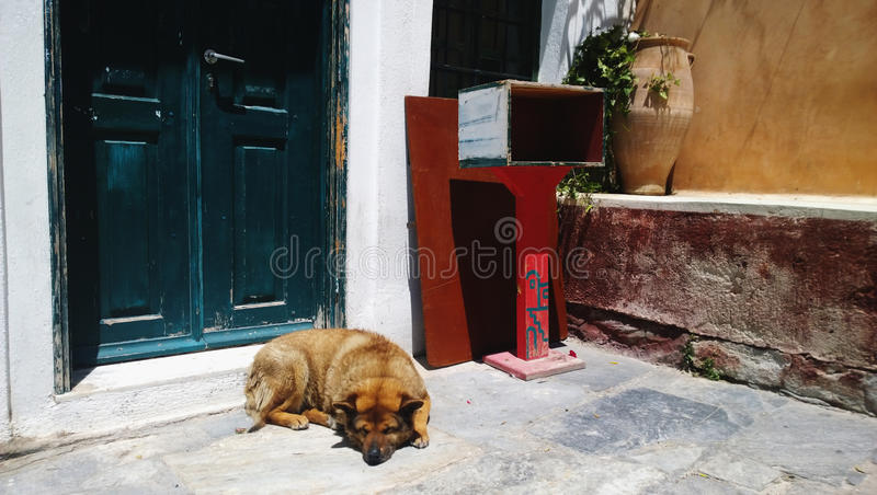 A stray dog lies on the street next to the front door stock photos