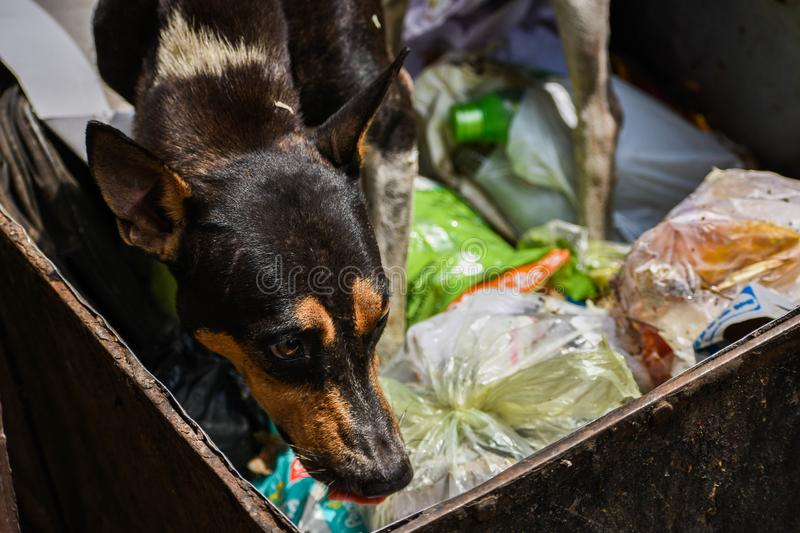 A stray dog looking for food from the garbage. royalty free stock photo