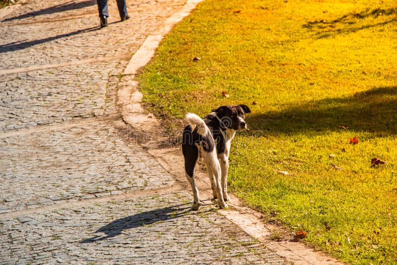 Stray dog is onderweg in een park royalty-vrije stock foto's