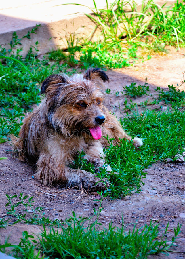 Download Stray Dog Stock Photo - Image: 83716400
