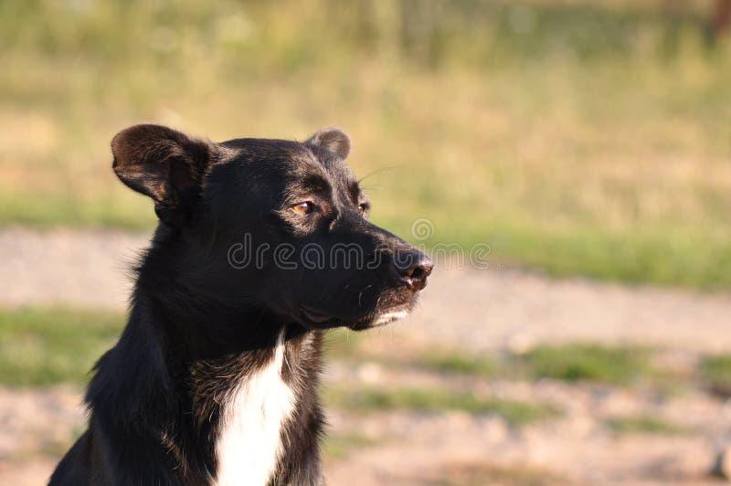 Stray dog portrait royalty free stock images