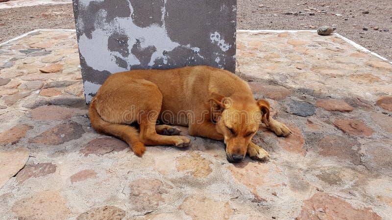 A stray dog in San Pedro de Atacama, Chile stock images