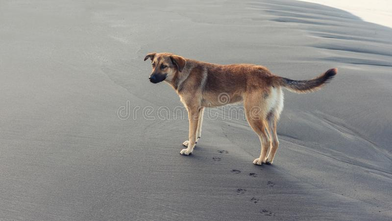 Stray dog on the sand by the sea waiting for the new owner royalty free stock photography