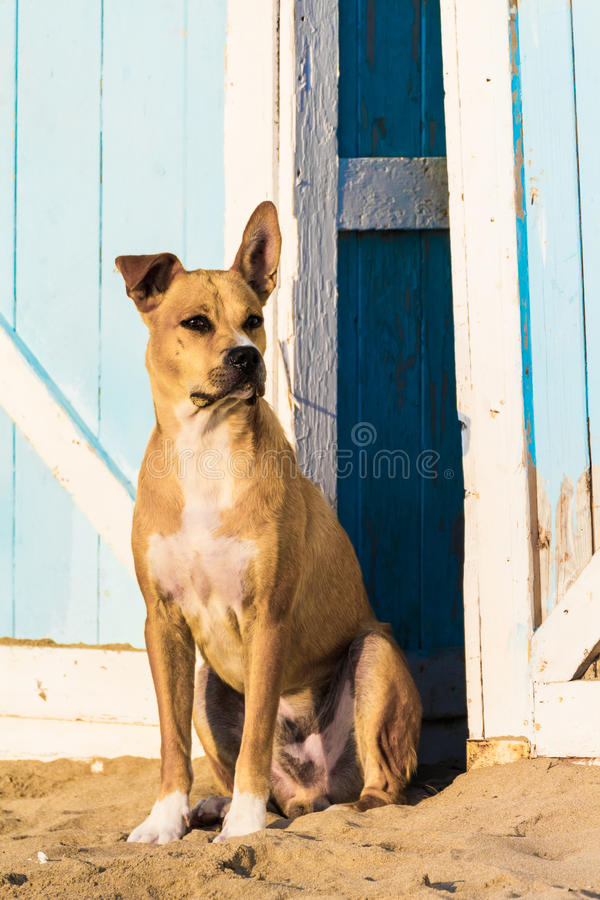 Download Stray dog on the sand stock image. Image of peaceful - 33201505