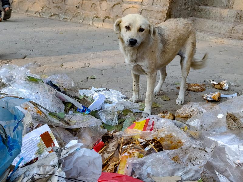 Stray dog searching food. A lonely stray dog searching for food from the dumped garbage on a winter morning stock photography