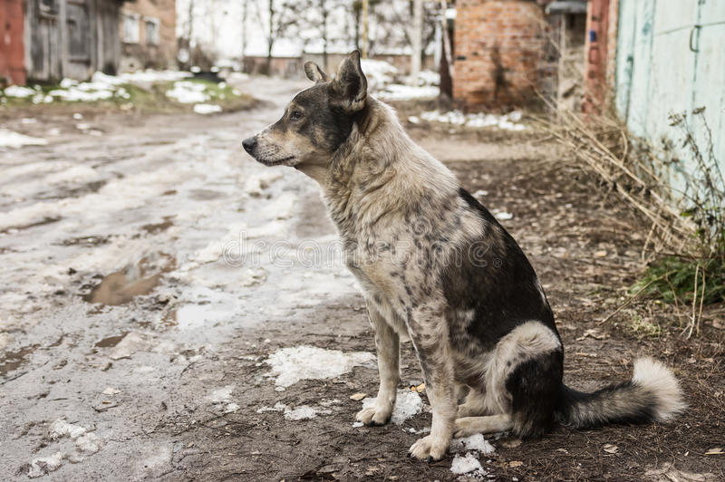Stray dog sitting on a dirty street at late fall season. Lonely stray dog sitting on a dirty street at late fall season royalty free stock photo
