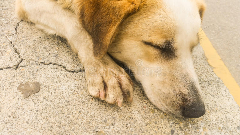 Stray dog sleaping on the pavement. Stray dog resting on the pavement royalty free stock photography