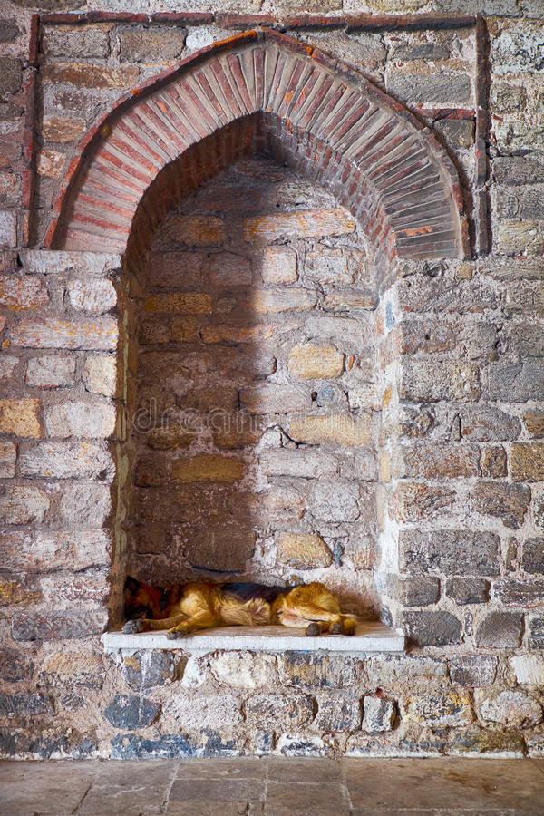 A stray dog sleeps in a blinded window of Hagia Irene Church, Is. Tanbul, Turkey stock photography