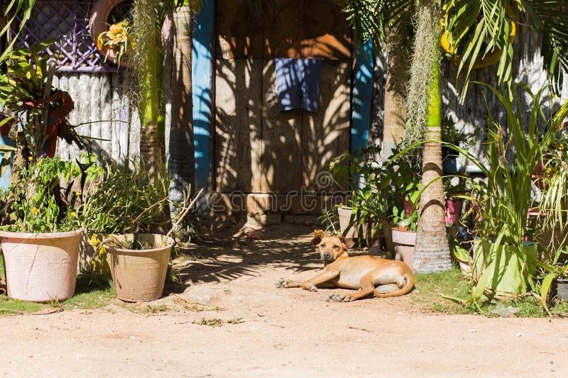 Stray dog on the streets in Mexico, March 20, royalty free stock photo