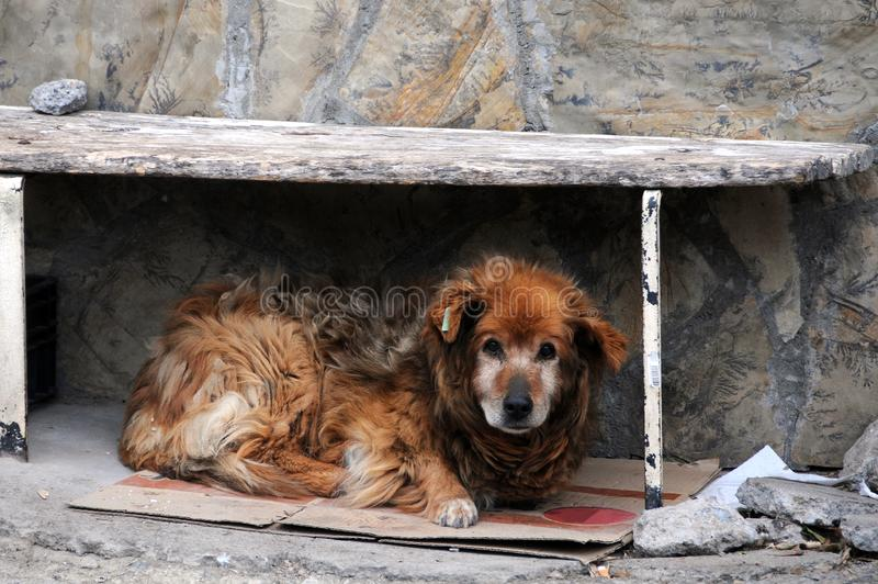 Stray Dog Under Bench royalty free stock photography