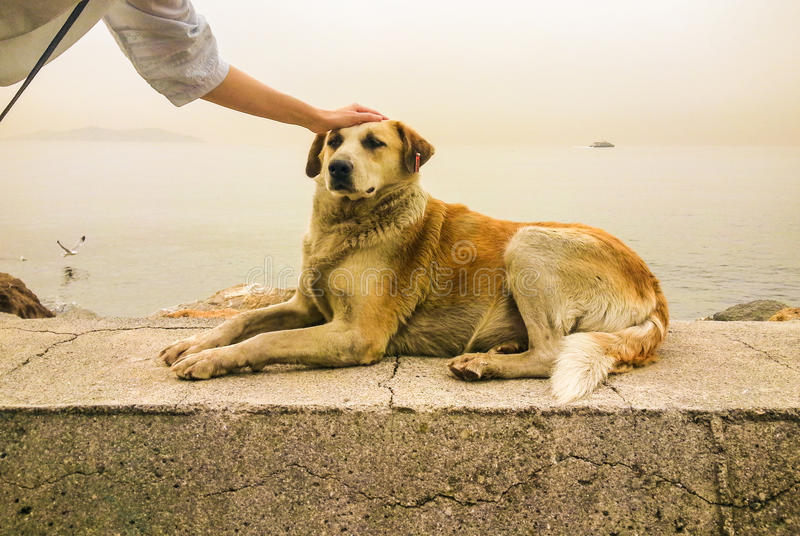 Stray dog and a young woman near the sea. Stray dog and a young woman stock photos