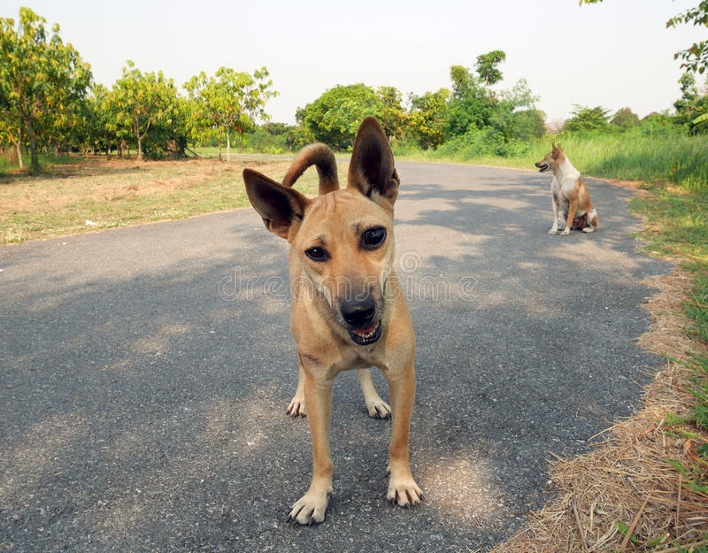 2 stray dogs in a park royalty free stock photo