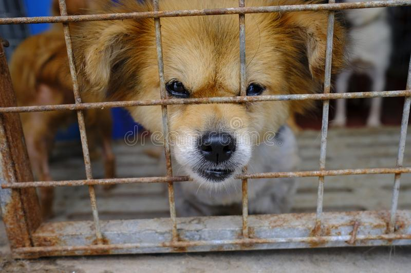 Shanghai stray dog rescue station stock images