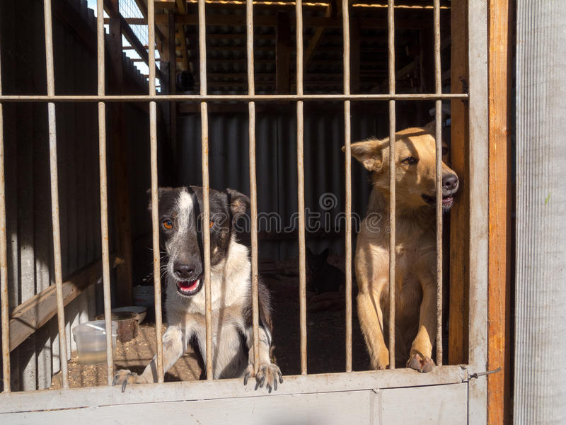 Download Stray dogs stock photo. Image of hungry, animal, puppy - 33256396