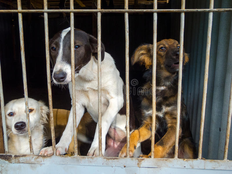 Stray dogs. In the shelter royalty free stock photo