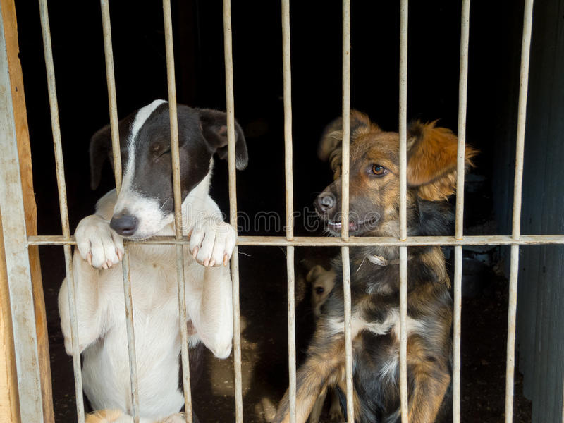 Stray dogs. In the shelter royalty free stock photography