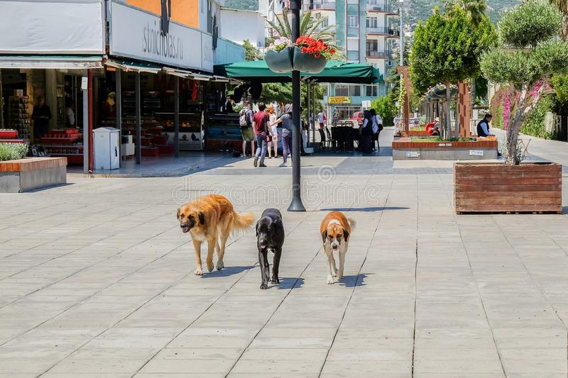 Stray dogs together stock images