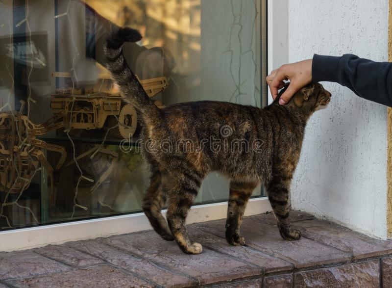 Stray kat op het raam van de winkel royalty-vrije stock fotografie