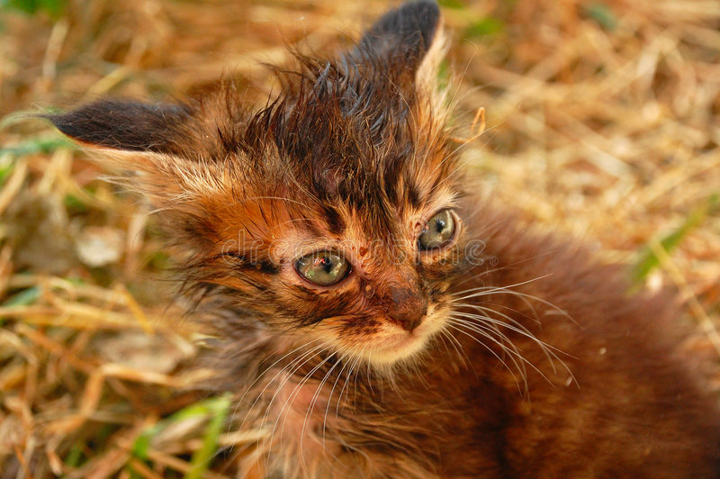 Download Stray kitten stock photo. Image of nice, mongrel, poor - 5388124