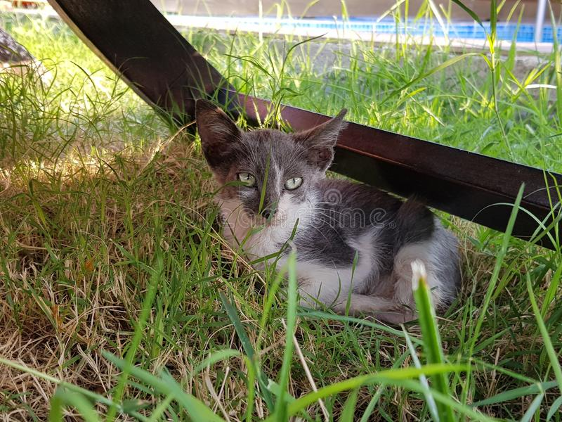 Stray Kitten in Griekenland royalty-vrije stock fotografie