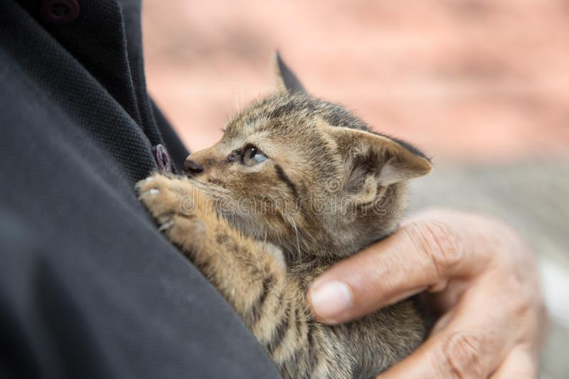 Stray Kitten with its human friend. A stray kitten in the hands of its human friend stock photos