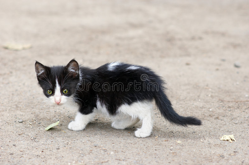 Stray kitten walking stock photos
