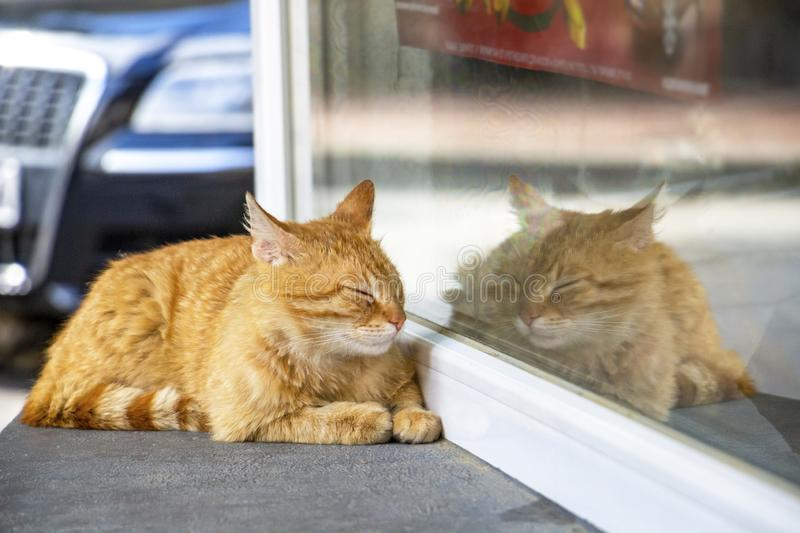 Stray orange tabby cat resting on a store window sill. Stray orange tabby cat, eyes closed, airplane ears, resting on the window sill of the lottery store in the stock images