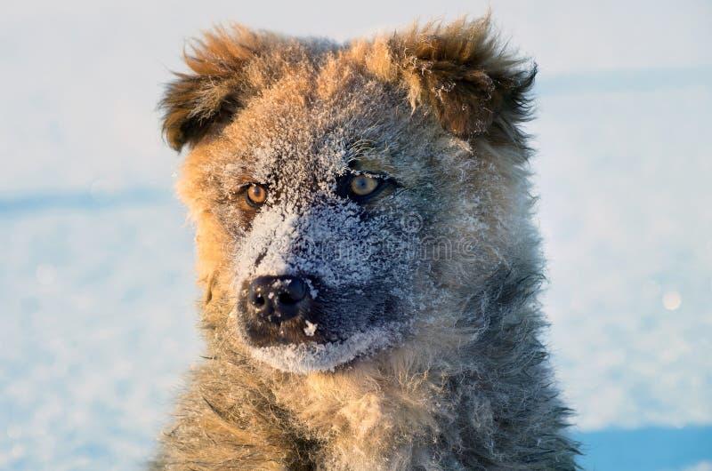 Download Stray puppy stock photo. Image of shiny, animal, curiosity - 23125416