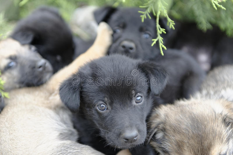 Stray puppy dogs. Litter of stray puppy dogs with green plants in background royalty free stock image