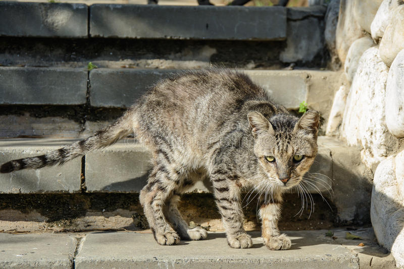 Stray sad cat. On the steps stock photography