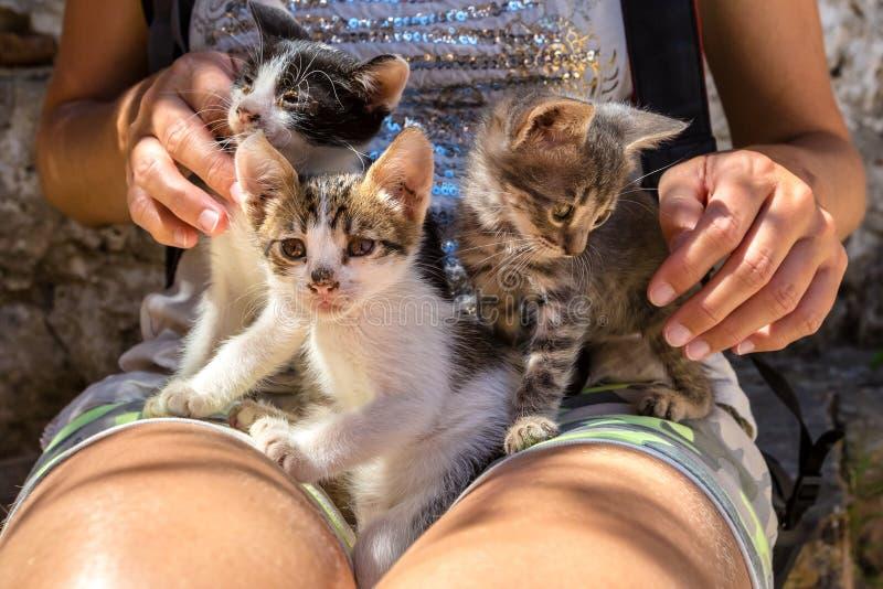 Stray sick kittens royalty free stock image