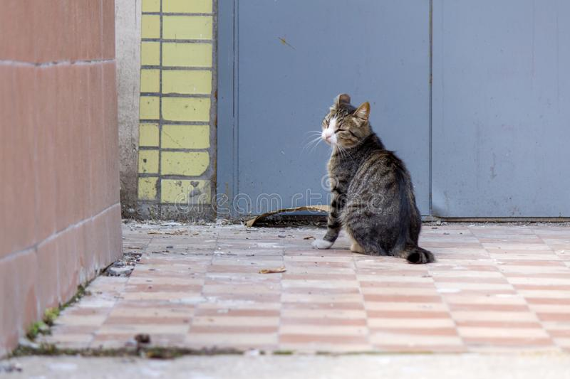 A stray tabby cat looks with contempt and disgust at the corner of a tiled wall. stock photography