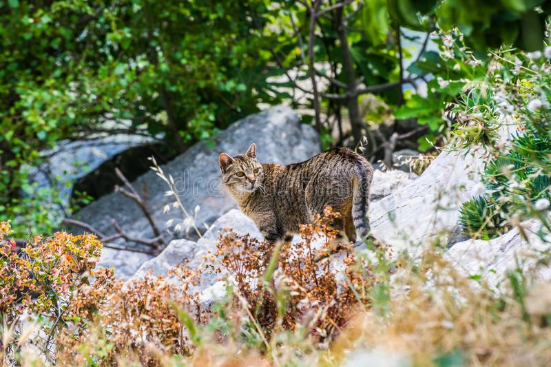 Stray tabby cat on shore of lake Sainte Croix, France. Provence stock images