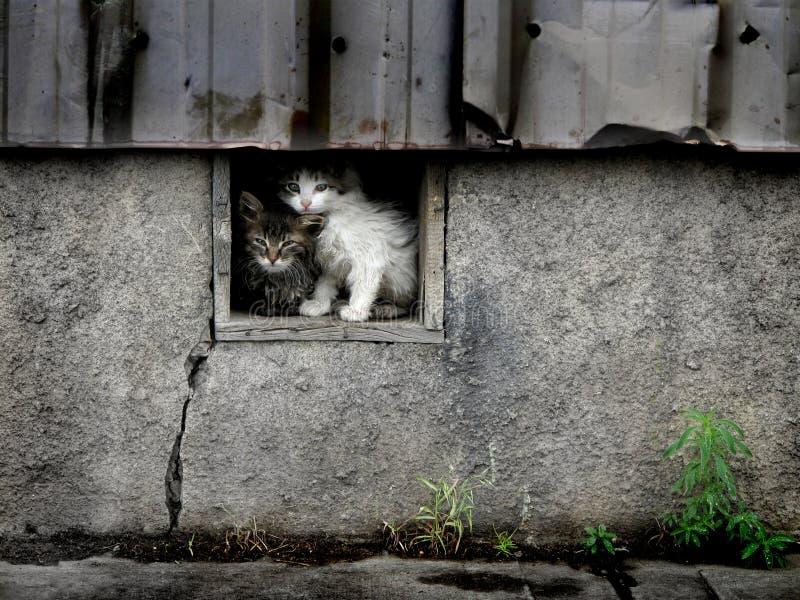 Stray Wet Kittens Stock Photography