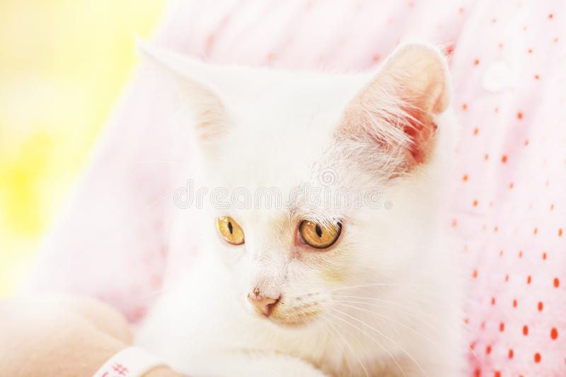 Stray white kitten stock photos