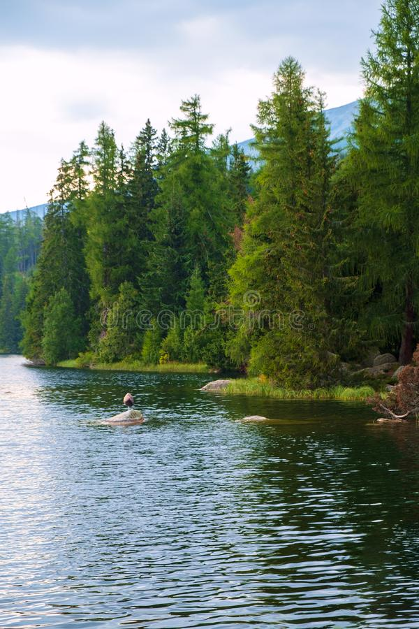 Strbske pleso mountain lake, Slovakia royalty free stock image