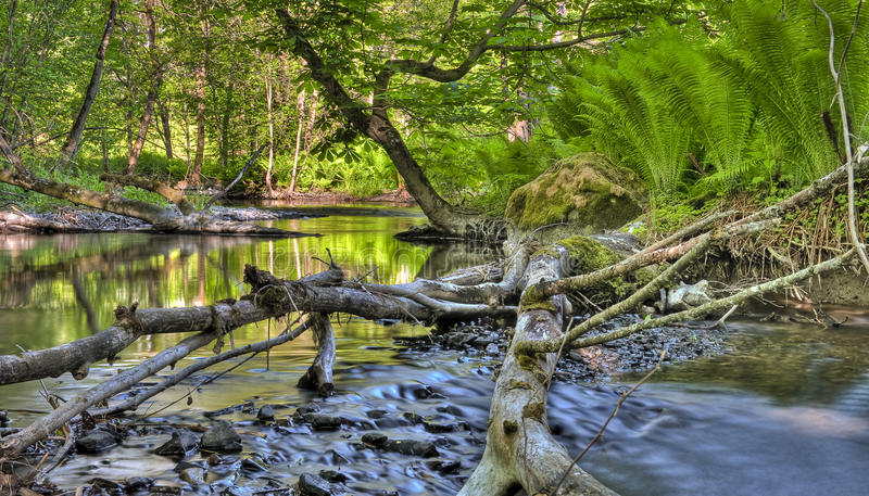 Stream Royalty Free Stock Images