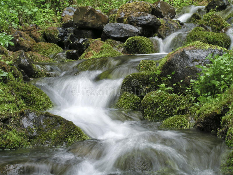 Download Stream stock image. Image of environment, forest, river - 24748043