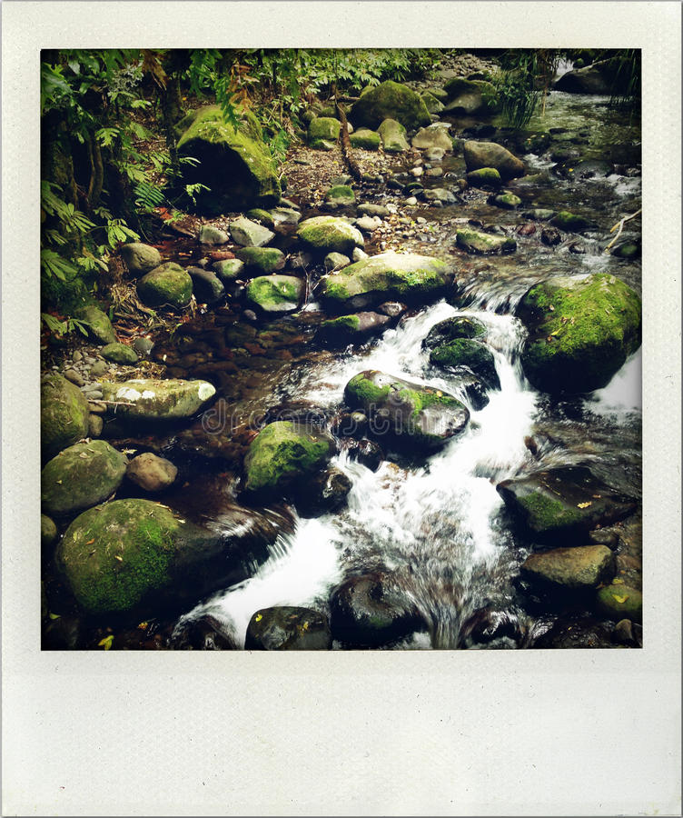 Download Stream stock photo. Image of forest, natural, flowing - 28022616