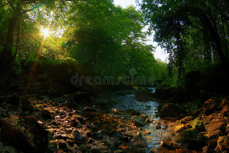 Stream. In the afternoon sun stock photos