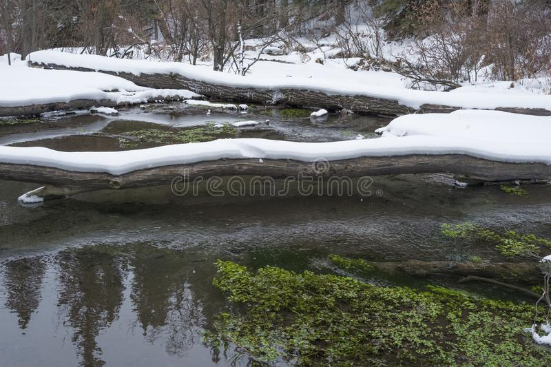 Big Hill Springs Provincial Park stream in winter. Stream adjacent to hike in Big Hill Springs Provincial Park in Alberta in the winter with snow royalty free stock photo