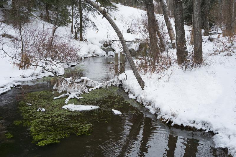 Big Hill Springs Provincial Park stream in winter. Stream adjacent to hike in Big Hill Springs Provincial Park in Alberta in the winter with snow stock images