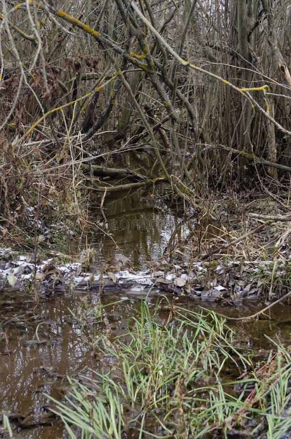 Stream in the autumn woods stock photos