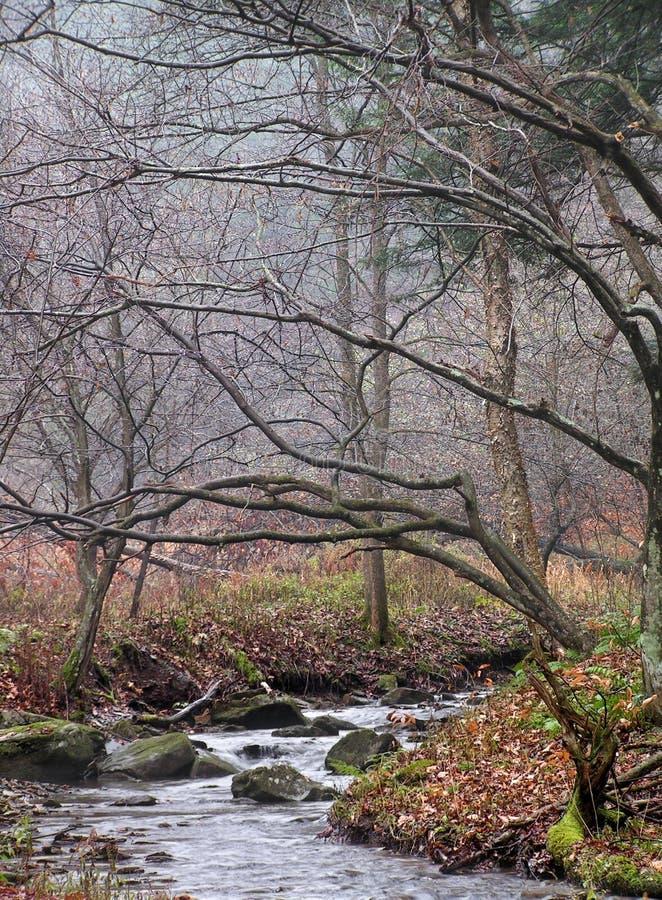 bare stream